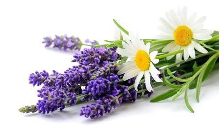 Bild für Kategorie Lavender & Chamomille