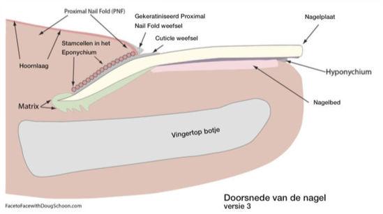Afbeeldingen van Productkit tbv Anatomie & Pathologie Class